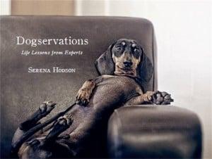 Dogservations